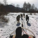 Dog sledding through the forest